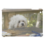Perro en la mesa de picnic