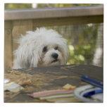 Perro en la mesa de picnic azulejos cerámicos