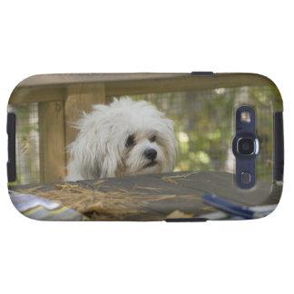 Perro en la mesa de picnic samsung galaxy s3 cárcasa