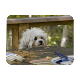 Perro en la mesa de picnic iman