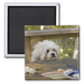 Perro en la mesa de picnic imán cuadrado