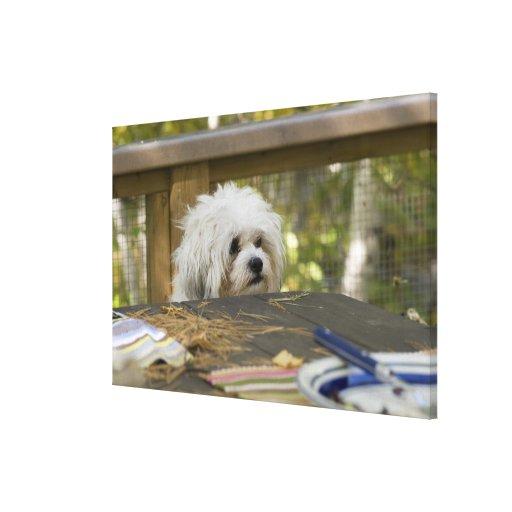 Perro en la mesa de picnic lienzo envuelto para galerias
