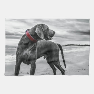 Perro en la naturaleza toallas