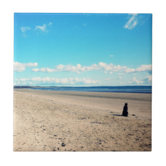 Perro en la playa tejas