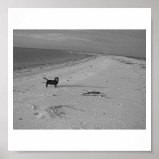Perro en la playa póster