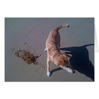 Perro en la playa tarjeta de felicitación