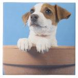 Perro en maceta azulejo cuadrado grande