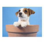 Perro en maceta tarjeta postal