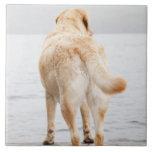 Perro en muelle azulejo cuadrado grande