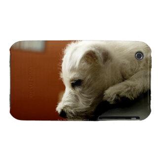 Perro en silla de la oficina iPhone 3 carcasas