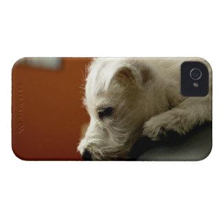Perro en silla de la oficina iPhone 4 coberturas