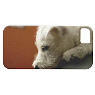 Perro en silla de la oficina iPhone 5 fundas