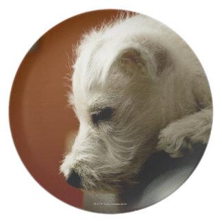 Perro en silla de la oficina plato de comida