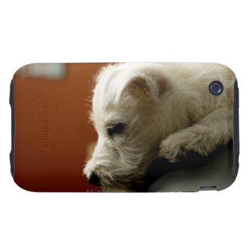 Perro en silla de la oficina tough iPhone 3 fundas