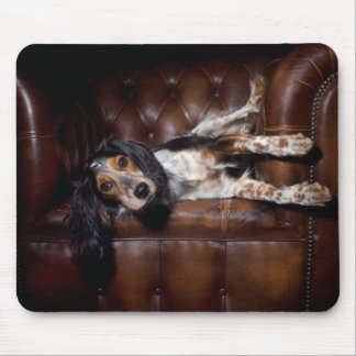 Perro en sofá tapetes de ratones