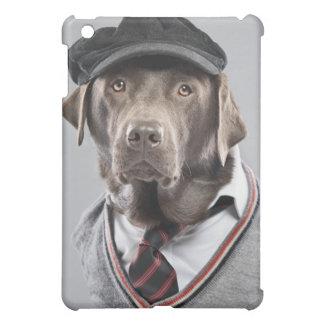 Perro en suéter y casquillo