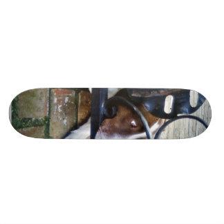 Perro en trabajo de mano de hierro patines