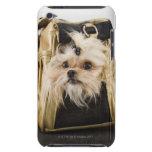 Perro en un monedero iPod touch Case-Mate coberturas
