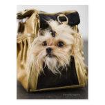 Perro en un monedero postales