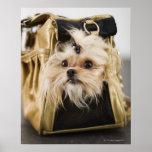 Perro en un monedero posters