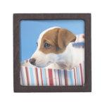 Perro en una caja de regalo caja de recuerdo de calidad