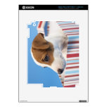 Perro en una caja de regalo pegatina skin para iPad 3