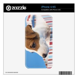 Perro en una caja de regalo skins para eliPhone 4