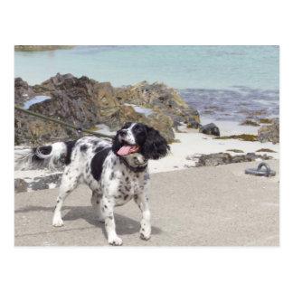 Perro en una playa - isla Mull Tarjetas Postales