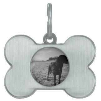 Perro en una playa placas de nombre de mascota