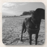 Perro en una playa posavasos