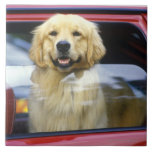 Perro en ventanilla del coche roja azulejo cuadrado grande