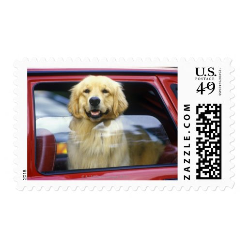 Perro en ventanilla del coche roja envio