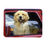 Perro en ventanilla del coche roja imanes