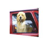 Perro en ventanilla del coche roja lona envuelta para galerias
