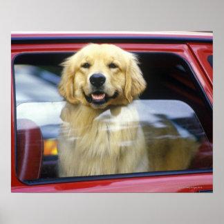 Perro en ventanilla del coche roja posters