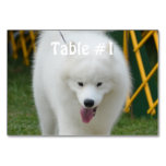 Perro esquimal americano adorable