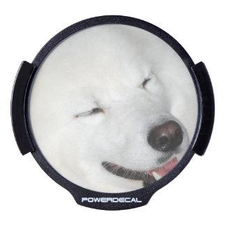 Perro esquimal americano blanco decal LED para ventana