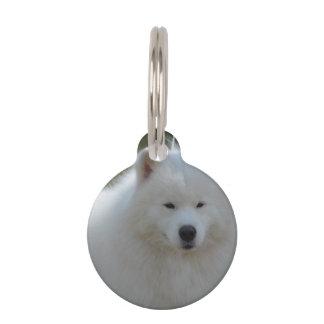Perro esquimal americano blanco mullido identificador para mascotas