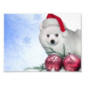 Perro esquimal americano del navidad impresiones fotográficas