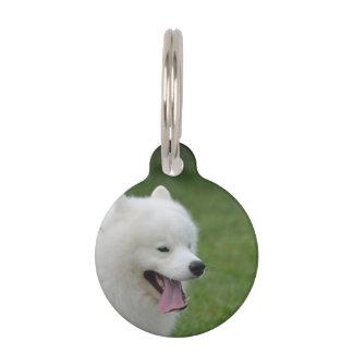 Perro esquimal americano dulce identificador para mascotas