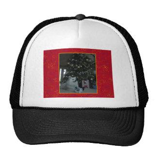 Perro esquimal americano gorras