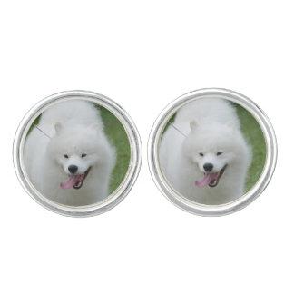 Perro esquimal americano lindo gemelos