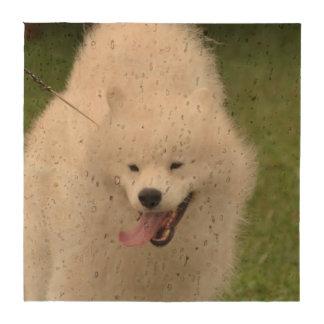 Perro esquimal americano lindo posavasos