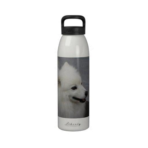 Perro esquimal botallas de agua
