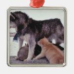 Perro esquimal con la litera de perritos ornamento de reyes magos