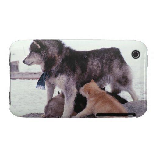 Perro esquimal con la litera de perritos iPhone 3 carcasa
