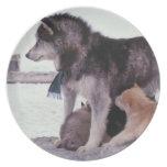 Perro esquimal con la litera de perritos plato