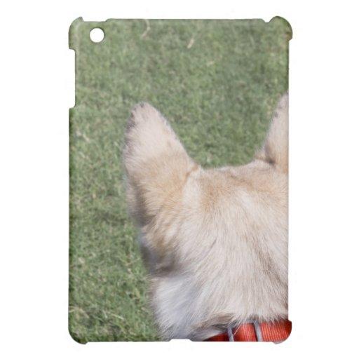 Perro esquimal de Alaska