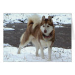 Perro esquimal de la nieve felicitacion