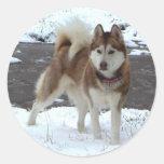Perro esquimal de la nieve pegatinas redondas